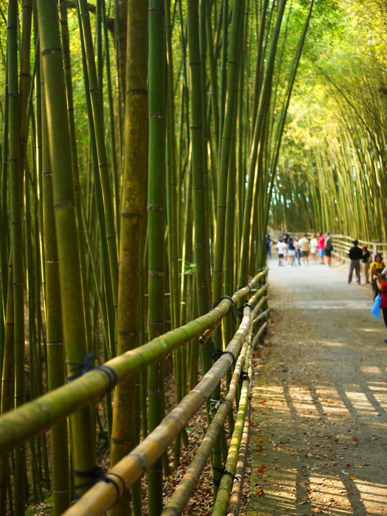 最有日本京都嵐山的竹林小徑氣氛的一小段 | 網紅景點 | 烏嘎彥竹林 | 泰安 | 苗栗 | RoundtripJp