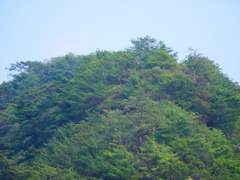 從奧萬大吊橋眺望青山 | 高山 | 奧萬大國家森林遊樂區 | レンアイ | ナントウ | 巡日旅行攝