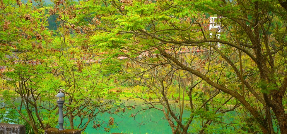 桶頭吊橋一隅 | 入口處小路 | 被大自然包圍 | 青綠色溪流 | Takeyama | Zhushan | Nantou | 巡日旅行攝