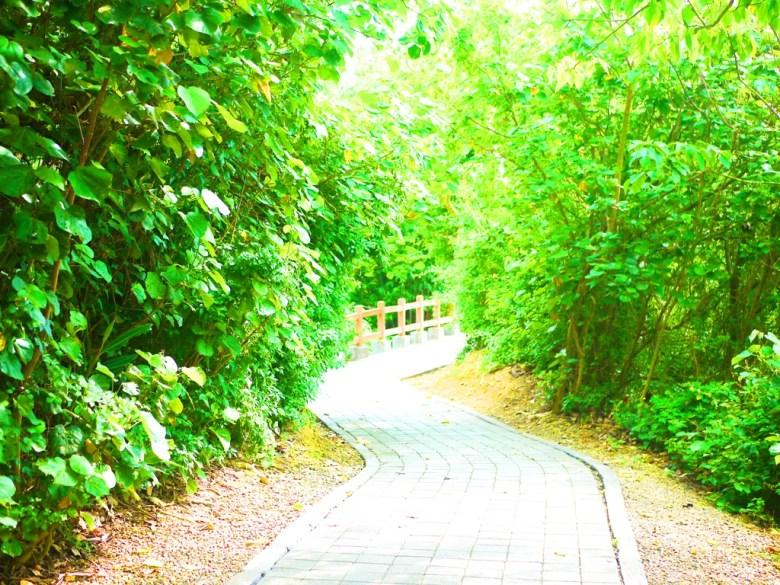 往崎頂觀景台方向 | 被大量綠色植物包圍的自然步道 | チーディン | ジューナン | ミアオリー | RoundtripJp