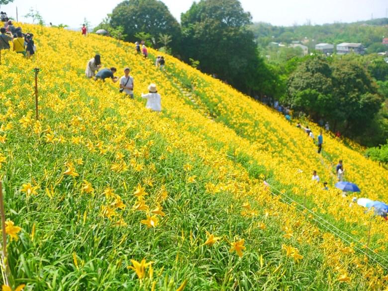 灑滿金黃色顏料的感覺   台灣旅人   網美景點   Huatan   Changhua   RoundtripJp   巡日旅行攝