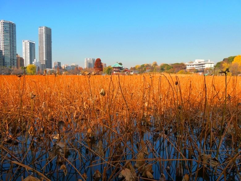 上野公園 | 上野 | 東京 | とうきょう | Tokyo | 日本 | 巡日旅行攝