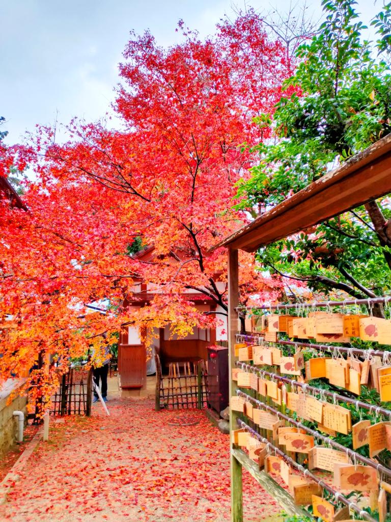 知曉秋天的一葉楓紅 | 紅葉與日本神社 | 動畫般的場景 | 繪馬 | 秋天的絕景 | 日本 | Japan | 巡日旅行攝 | RoundtripJp