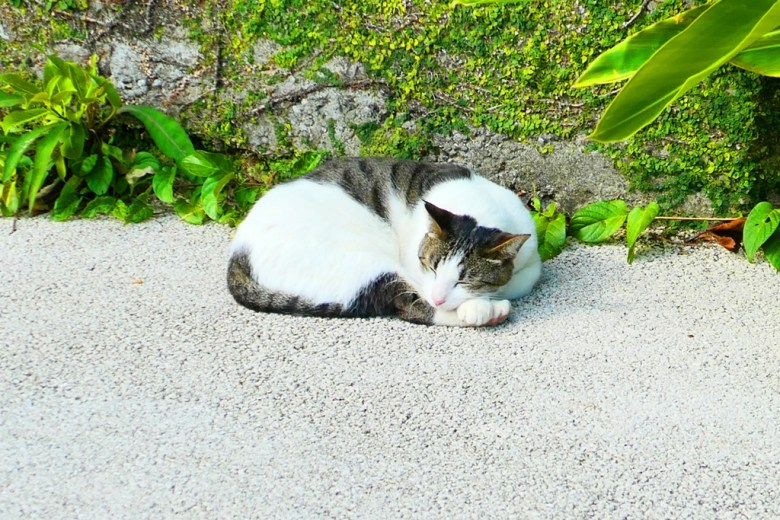 睡著的貓咪 | 安詳愜意 | 貓與大地 | 貓咪 | 可愛動物 | 日本 | Japan | 巡日旅行攝 | RoundtripJp