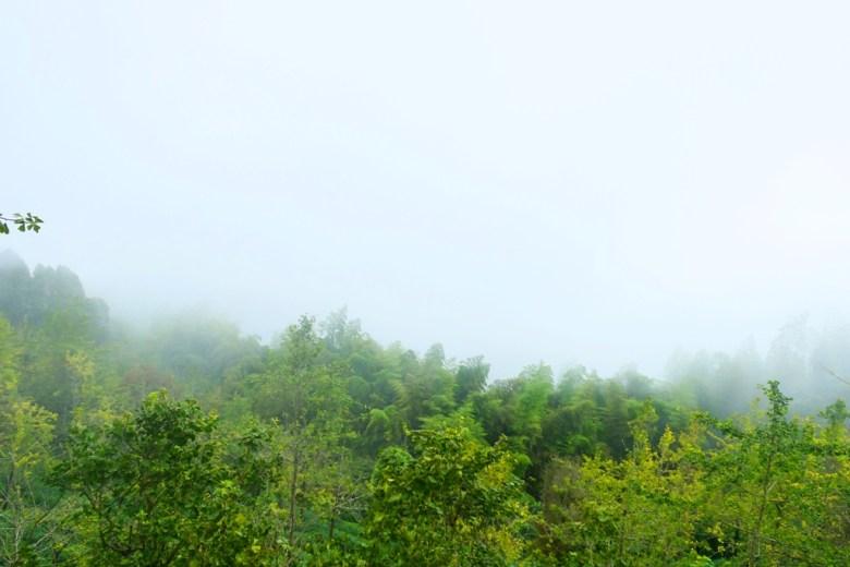 遠山景緻   滿是綠意的美麗山嵐   台灣山林之美   銀杏森林   ルーグー   Lugu   Nantou   Taiwan   和風臺灣   巡日旅行攝   RoundtripJp
