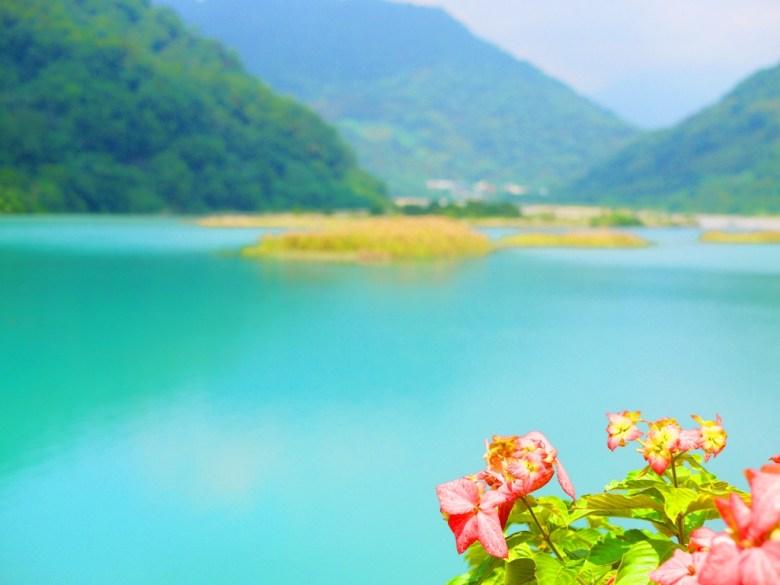 紅花配青池 | 大自然之美 | あおいいけ | Blue Pond | Taian | Miaoli | 和風臺灣 | 巡日旅行攝 | RoundtripJp