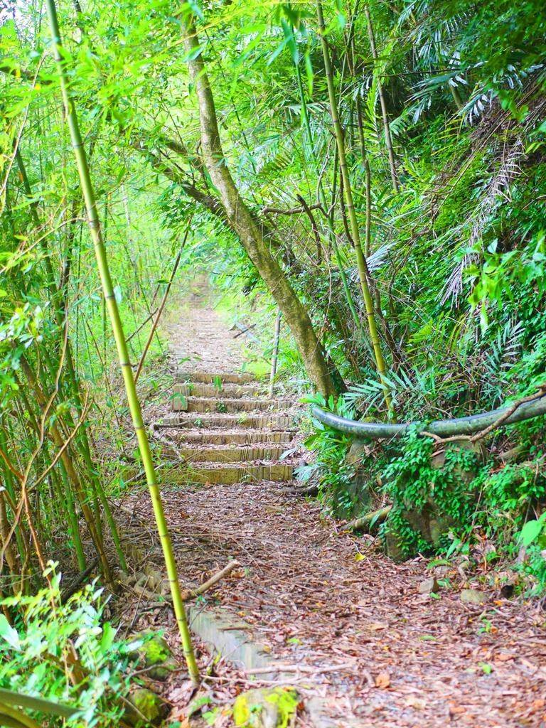 彷彿進入遠古時代 | 老舊的古道 | 荒野道路 | 部落秘境 | タイアン | たいあん | ミアオリー | Wafu Taiwan | 巡日旅行攝 | RoundtripJp