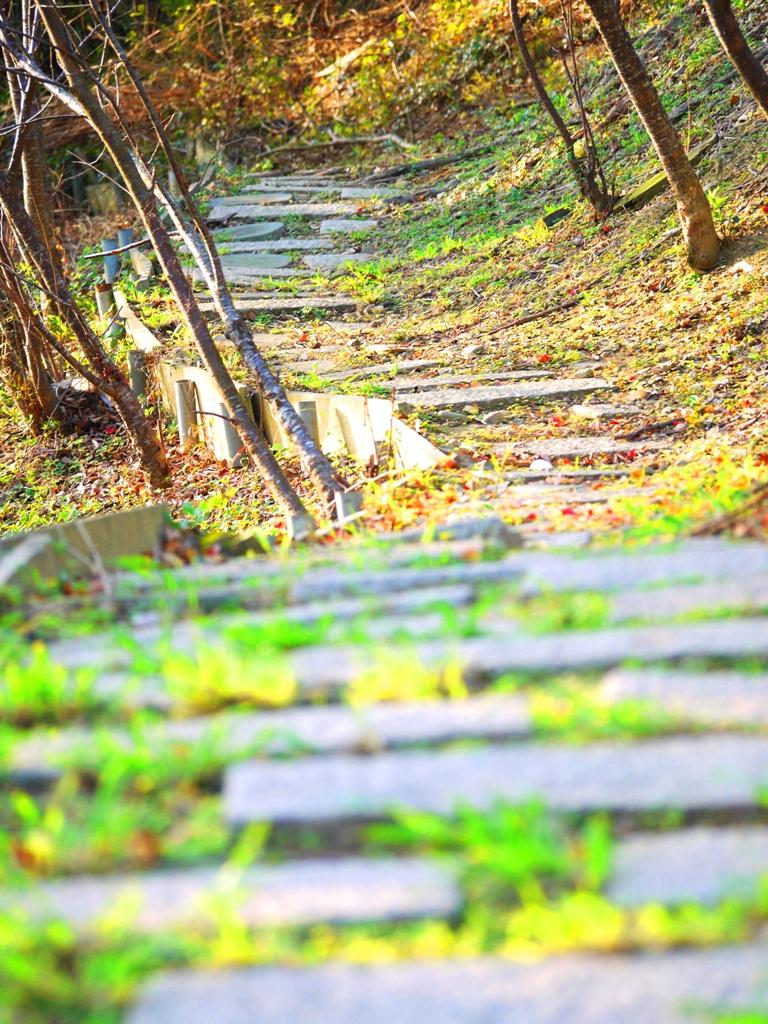 苗栗稻荷神社遺跡好漢坡   樓梯兩側的健行步道   散步   びょうりつし   ミアオリー   Wafu Taiwan   巡日旅行攝   RoundtripJp