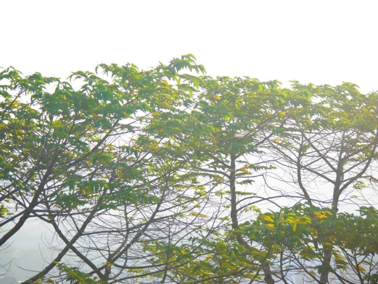晨間霧氣   飄渺仙境的感覺   從聯合大學後門眺望苗栗市之美   苗栗稻荷神社遺跡好漢坡   びょうりつし   ミアオリー   Wafu Taiwan   巡日旅行攝   RoundtripJp