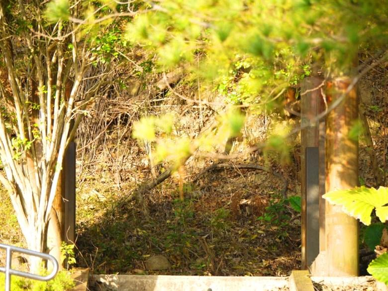 神社遺址   神社本殿基座   苗栗稻荷神社遺跡   Miaoli Inari Shrine Ruins   びょうりついなりじんじ   びょうりつし   ミアオリー   Wafu Taiwan   巡日旅行攝   RoundtripJp