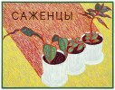 """Seedlings"" 2015. Oil on canvas, 90 x 70 cm"