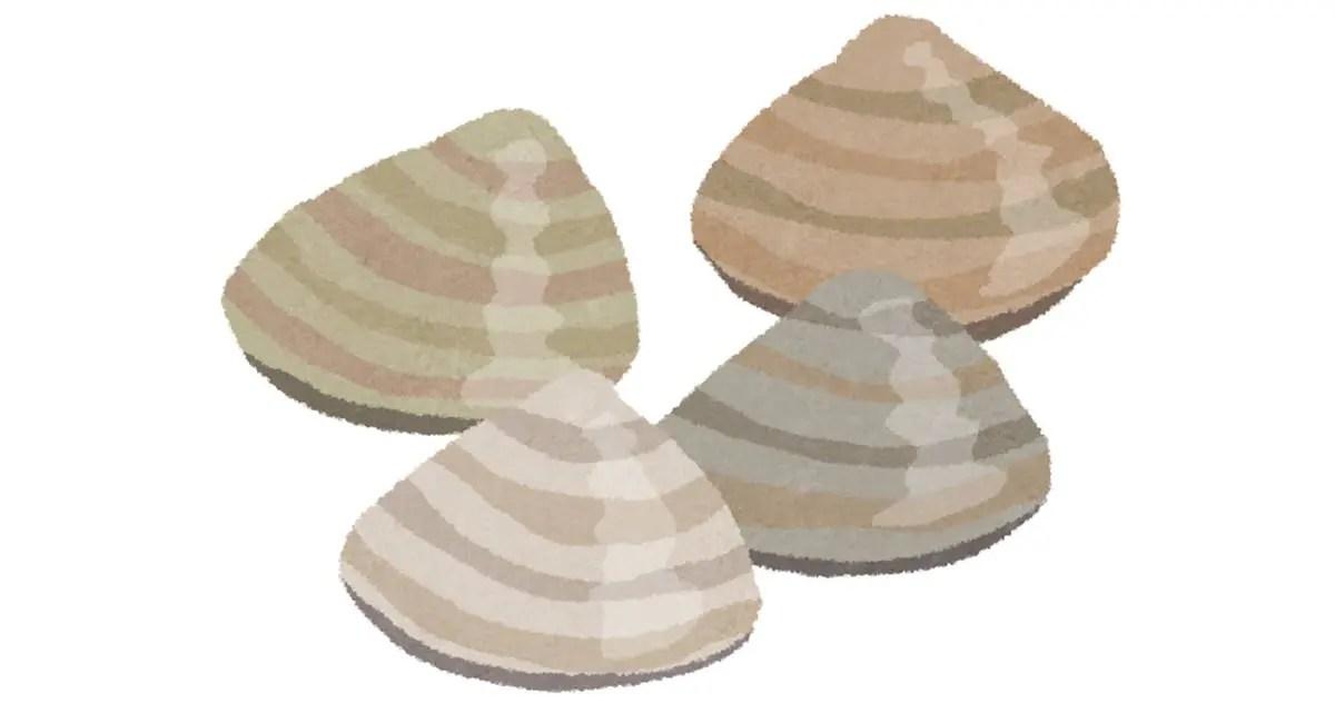 ホンビノス貝 値段 通販