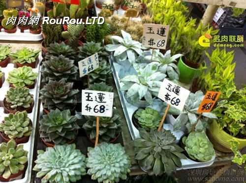 香港花墟裡的多肉植物_多肉植物