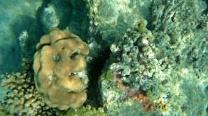 an urchin
