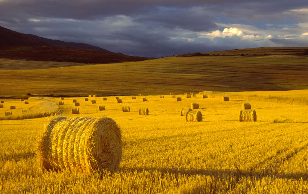 African Farm Experience And Farm Stay In The Overberg