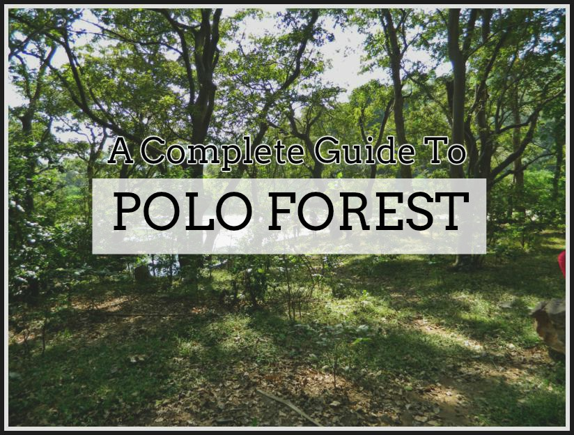 polo Forest Cover