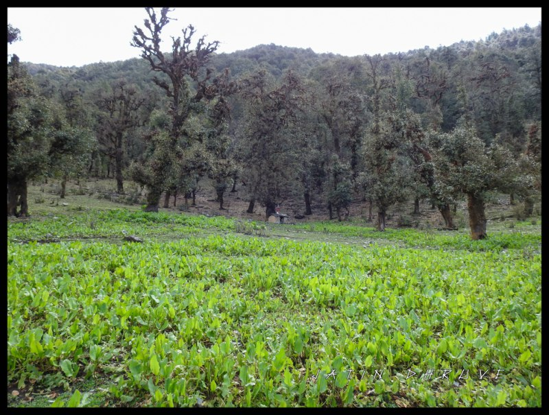 flora and fauna at bedini bugyal