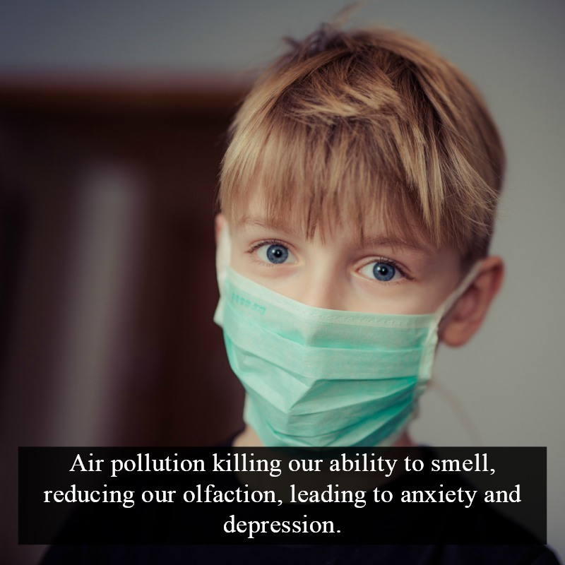 air pollution killing our sense of smell