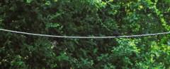 Rajasthan Bird