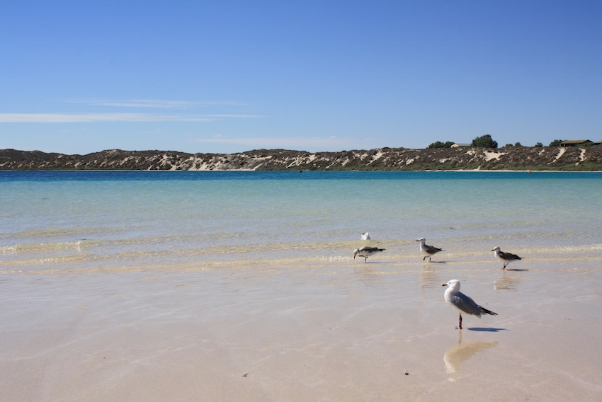 The pristine water in Coral Bay