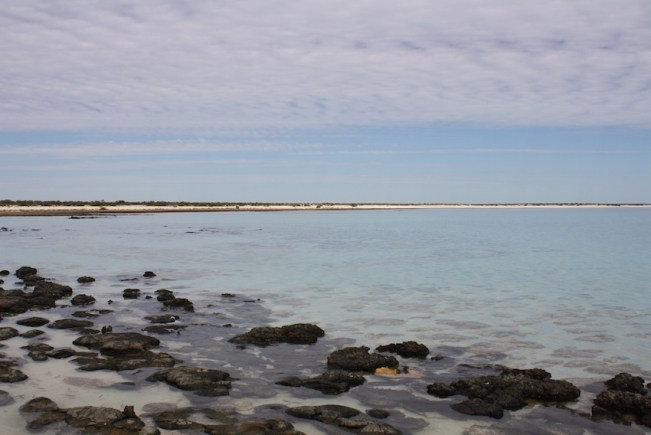 Stromatolites with a view
