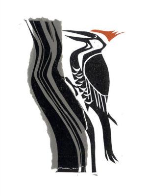 Woodpecker - Norton St.Philip