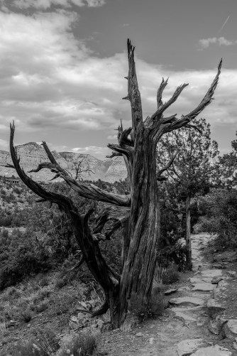 Tempelton/Cathedral Rock Trail, Sedona, AZ