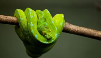 Book Review: Learn Python The Hard Way 3