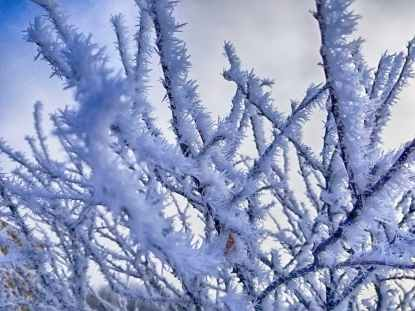 tree coated with snow