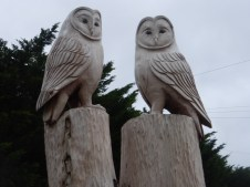 Wise owls at Ysgol Aberconwy by Edward Parkes