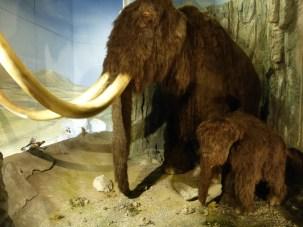 Animatronic mammoth, Cardiff Museum