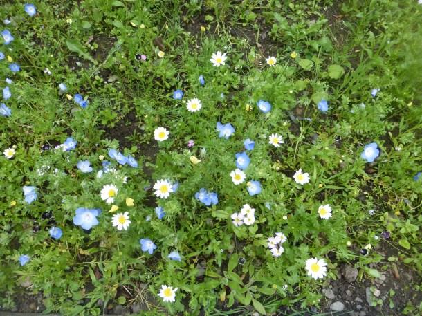 wildflowers 2019 June