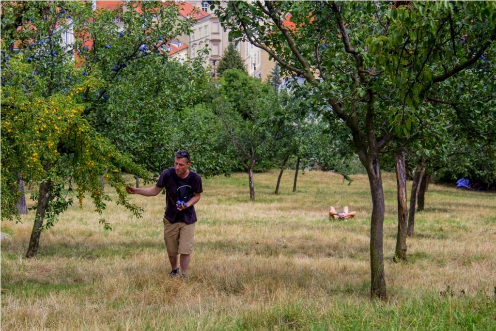 Wzgórze Petrin. Zielony park z drzewkami owocowymi