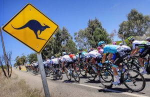 kolarze mijają znak z kangurem