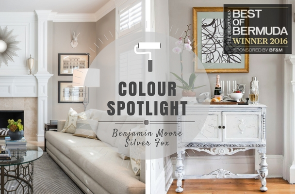 COLOR SPOTLIGHT - Benjamin Moore Silver Fox