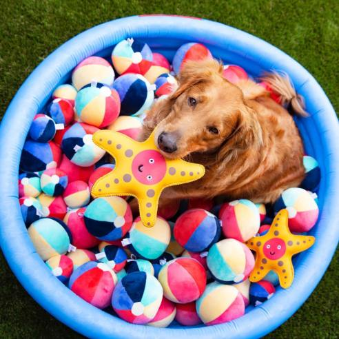 Dog toys and accessories made in the United States from eco-friendly recycled materials.