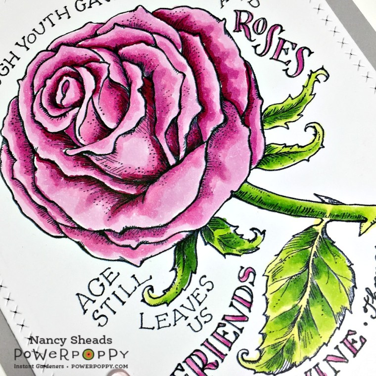 Rowhouse Greetings   Vital Rose by Power Poppy
