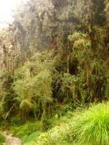 Walking through cloud forest