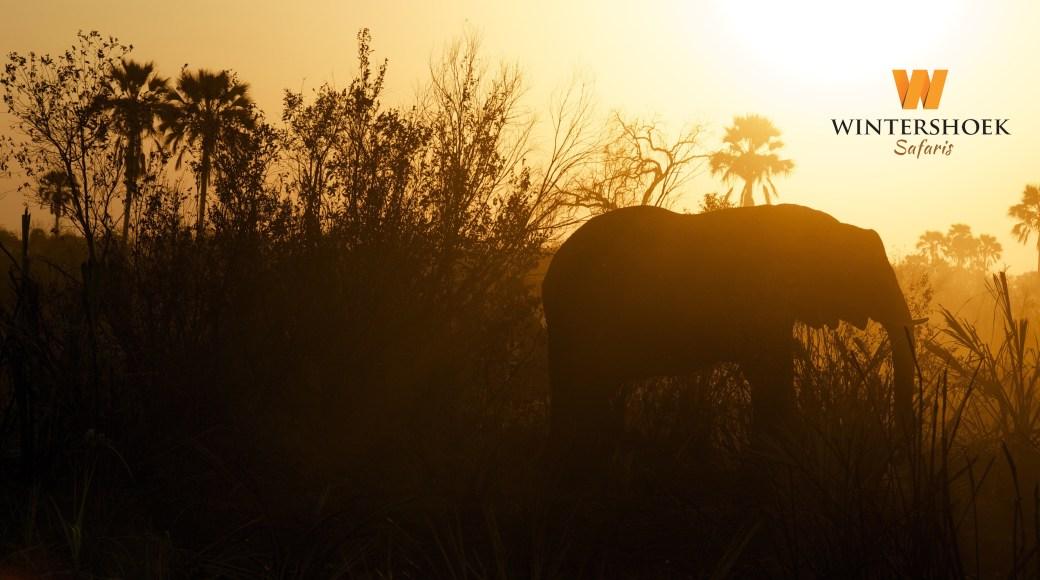 elephant at sunset logo top