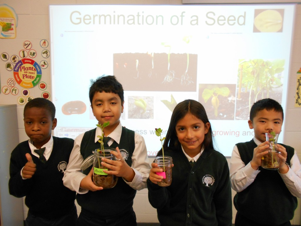 Students learning Hands-on about germination