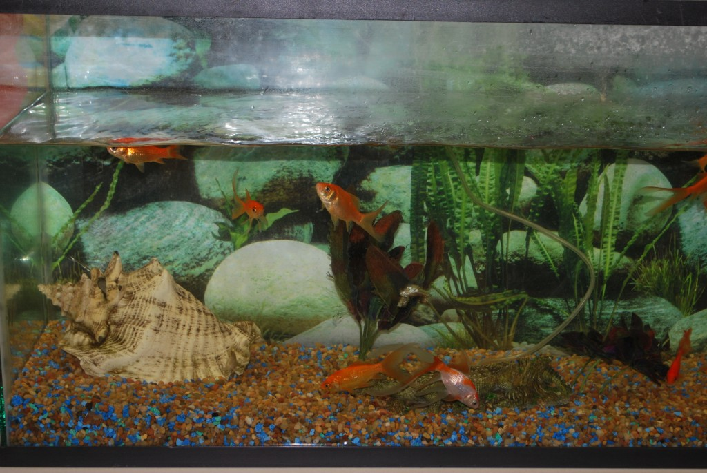 An Example of a Live Ecosystem in the Science Lab