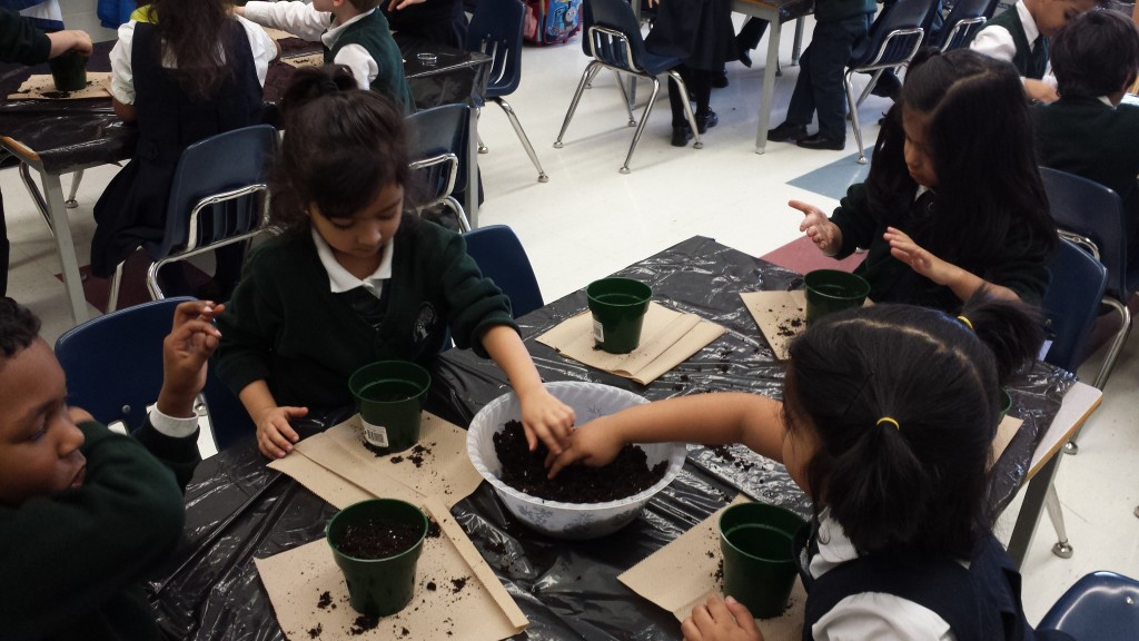 Students are very eager to pant their seeds