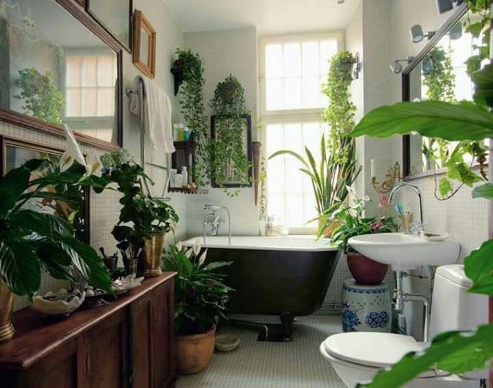 Decora el cuarto de baño con plantas