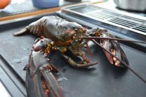 Lobster Roll en devenir
