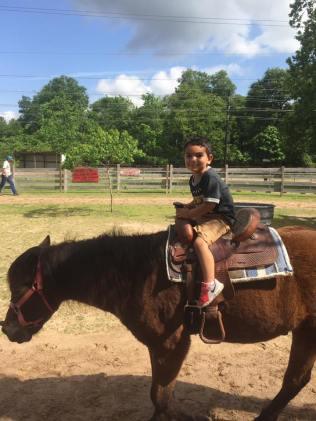 Oliver Horse