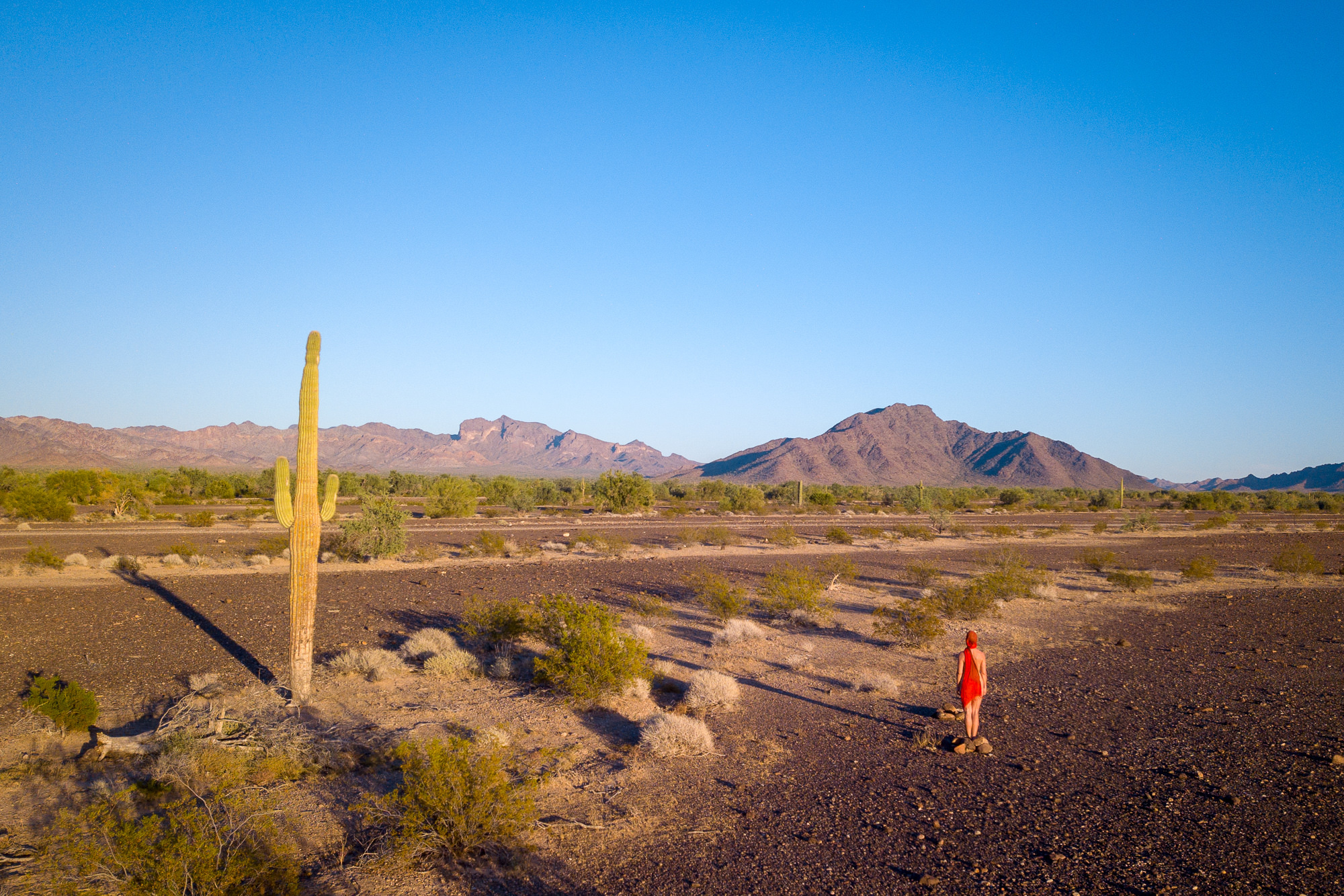 photo: I AM: Discussing age at sunset with a saguaro