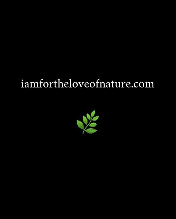 photo from roxanne darling solo show - i am for the love of nature sign