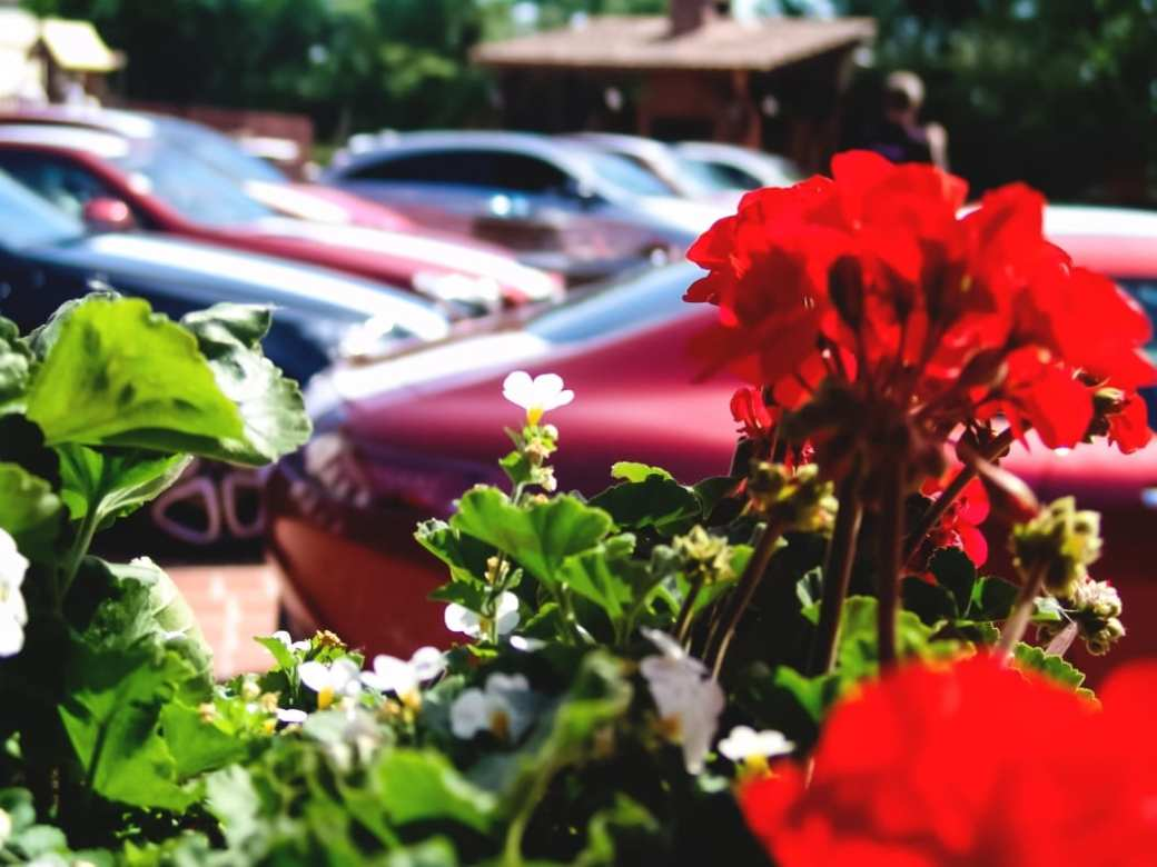 amg roadshow timisoara romania roxi rose blog blogger amg gt s