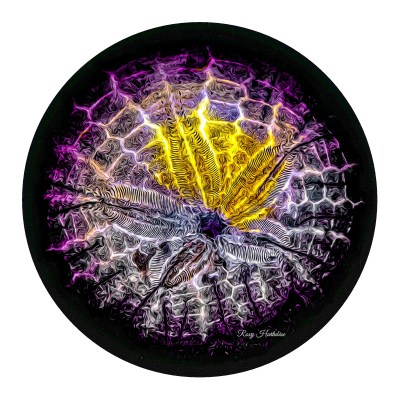 Spotlight Sand Dollar Round Aluminum Metal Print by Roxy Hurtubise
