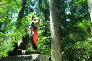 三峯神社, 山犬, 御犬様, オオカミ